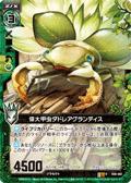 伟大甲虫 大白菊