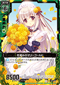 摘花的万寿菊