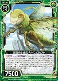 跳跃的绿茑 藤蔓蝗虫