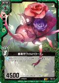 蔷薇独角仙 野玫瑰