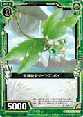 灵威蜻虫 绿叶网蝽